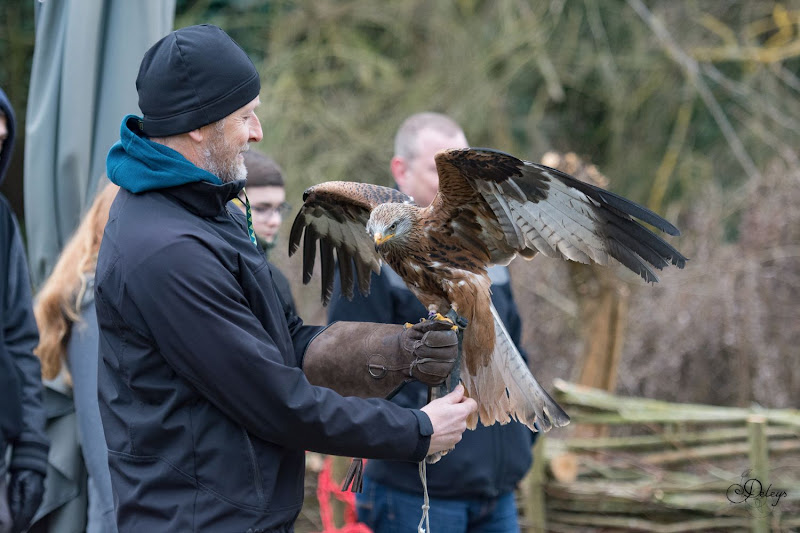 Gempse roofvogelworkshop 28 jan 2017 (credits to Timothy Leysen)