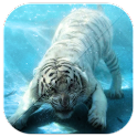 Tiger In Water LWP icon