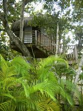 Photo: The treehouse.