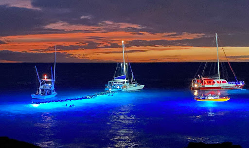 manta-rays.jpg - The Night Dive with the Manta Rays event attracts visitors from around the globe.