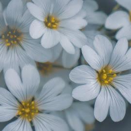 by Anabela Besic - Flowers Flower Gardens (  )