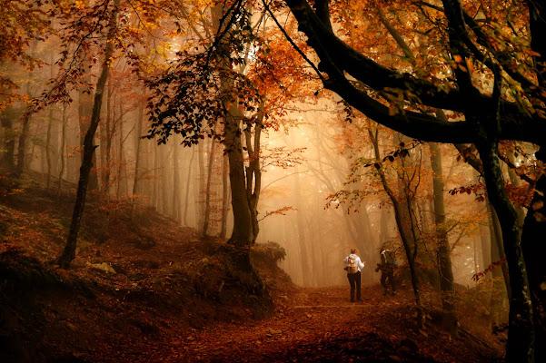 Un bosco che ispira... di mariateresatoledo