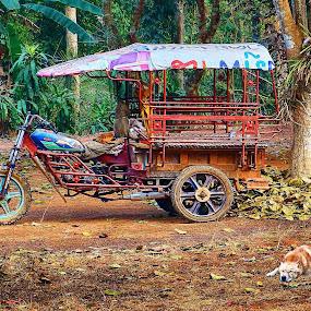 Dogs Life Guarding a Tuk Tuk by James Morris - Transportation Other ( thailand, dogs, tuk tuk, transport, travel, dog, transportation,  )