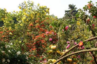Photo: Sangerhausen EUROPA-ROSARIUM - Blütenpracht