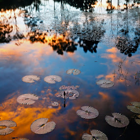Reflected sunset colors on a pond with tulips leaves as a foreground.  Borneo, Sabah, Malaysia by Macbrian Mun - Nature Up Close Water ( relax, reflected, yellow, vibrant, travel, leaf, borneo, sabah, village, tree, nature, weather, light, orange, silhouette sky, colors, twilight, wallpaper, horizon, lake, malaysia, sunlight, holiday, season, serene, tulip, outdoors, trees, scene, view, tranquility, natural, floral, calm, plant, reflection, colorful, vivid, tropical, plants, reflections, beauty, landscape, spring, sun, mirror, tranquil, asia, evening, pond, water, clouds, peaceful, flora, scenics, beautiful, backgrounds, scenic, morning, red, color, bushes, blue, sunset, outdoor, background, peace, summer, cloud, scenery, sunrise, river )
