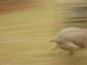 Photo: streak of dog