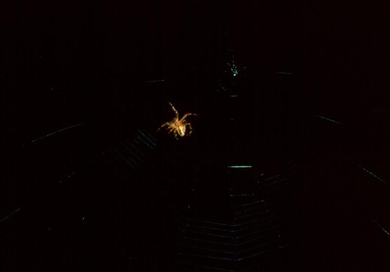 La vita nel buio di luciano_tronati
