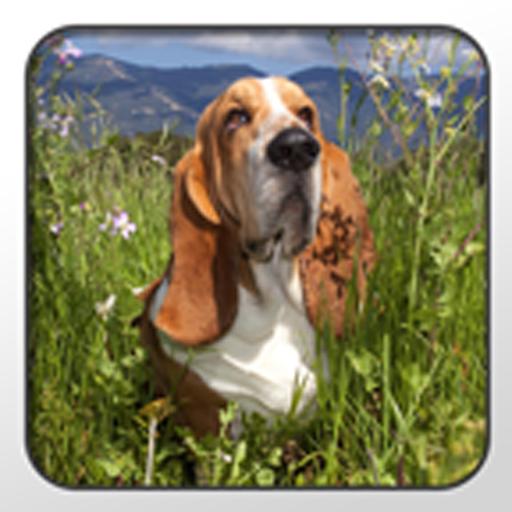 Basset Hound Theme - Nova/ADW 個人化 App LOGO-硬是要APP