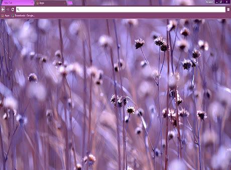 Purple Ambiance