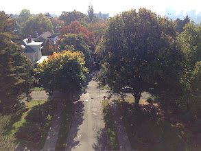 Photo: View from the Water Tower  Volunteer Park Olmsted Brothers 1909