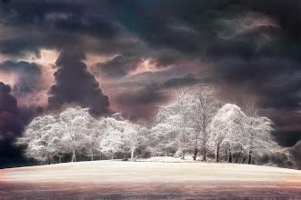 Photo: Unicorn Wood (Clive Haynes)