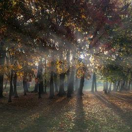 foggy morning by Gigi Kent - Instagram & Mobile iPhone