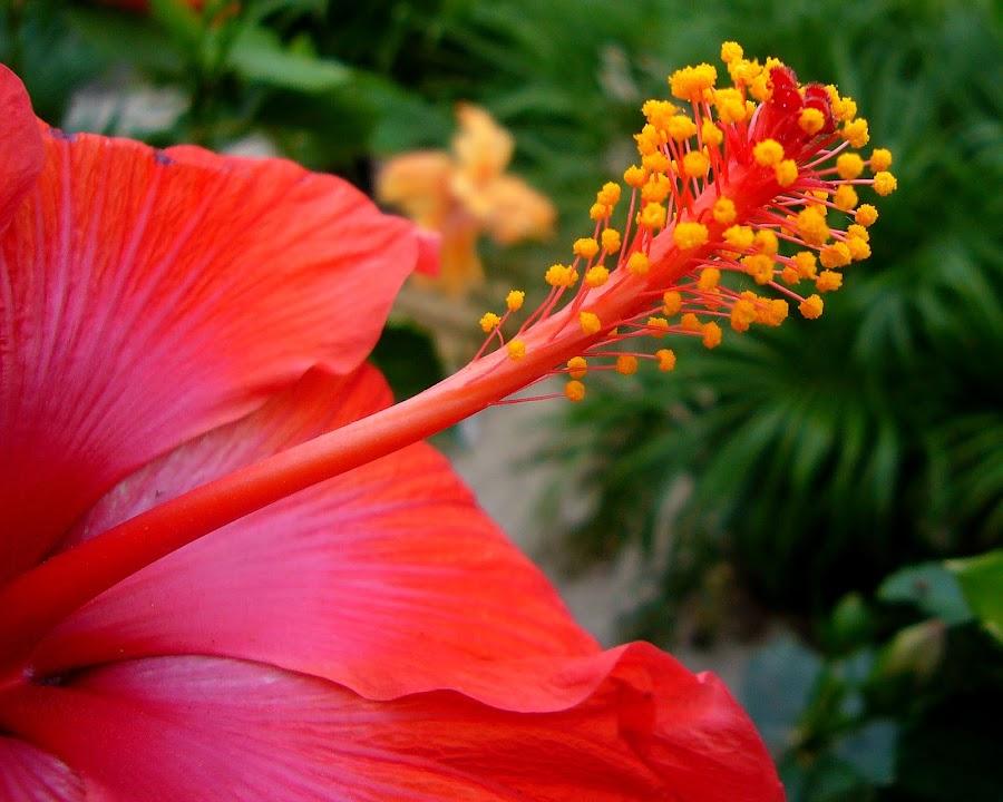 Macro of flower by Peggy LaFlesh - Flowers Single Flower ( orange, macro, flower )