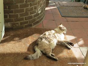 Photo: Sinjo geniet van de zon