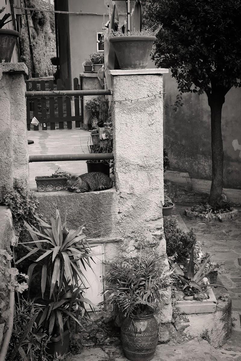 Una dormita tra le vie di Porto Venere di ambibedo