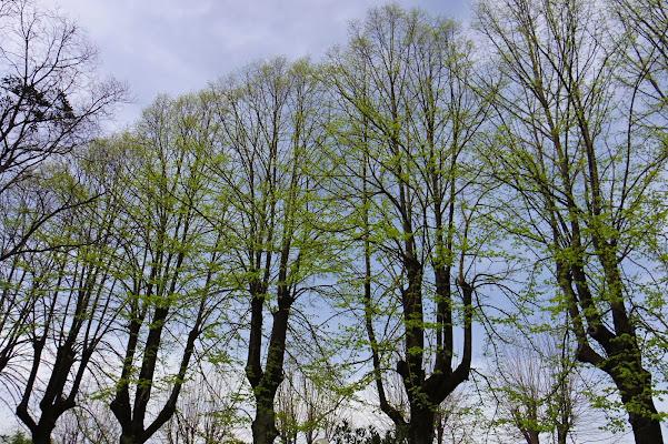 piccole foglie crescono di PhotoFabio