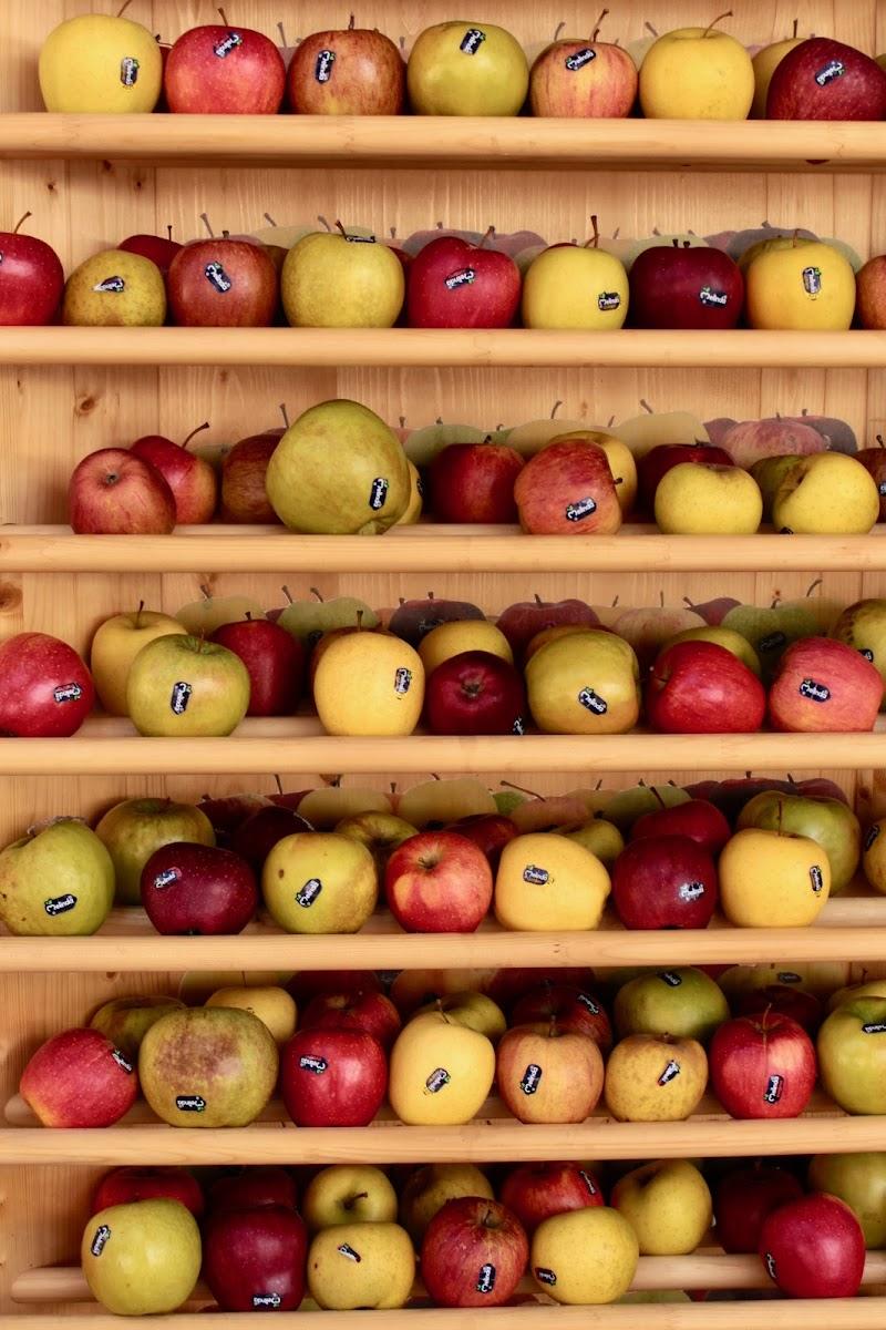 Apples di caterina_kitta