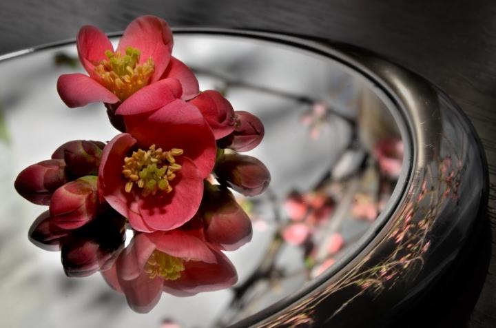 La primavera...è servita! di kyra