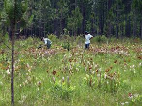 Photo: Siggi and Brian filming Sarracenia at Splinter Hill Bog Preserve in Alabama.