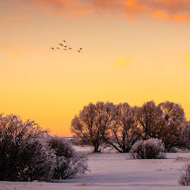 Quiet Evening by Chad Roberts - Landscapes Sunsets & Sunrises ( sky, frost, snow, sunset, bushes, winter, cold, evening, ducks, trees, willows,  )