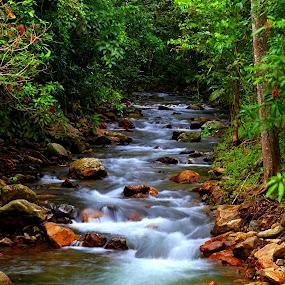 Rainforest Rapids by Lee Newman - Landscapes Waterscapes ( waterfall, creek, rapids, edmonton, rainforest,  )