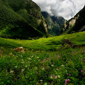In pristine lands... by Rohit Chawla - Landscapes Mountains & Hills ( valley of flowers, macro, nature, garhwal, cosurvivor, uttarakhand, india, himalayas, flower )