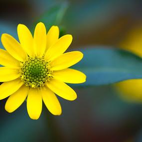 by Manash Kaushik - Flowers Single Flower