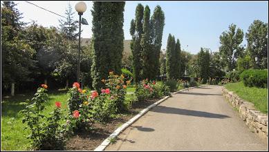 "Photo: Trandafiri (Rosa) - in parcul Bisericii Ortodoxe ""Invierea Domnului "" - 2017.06.21"