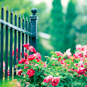 free rose garden wallpaper icon