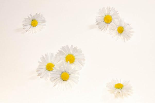 giallo su bianco di Giomi