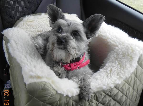 Luxury Lookout Car Seat For Dogs