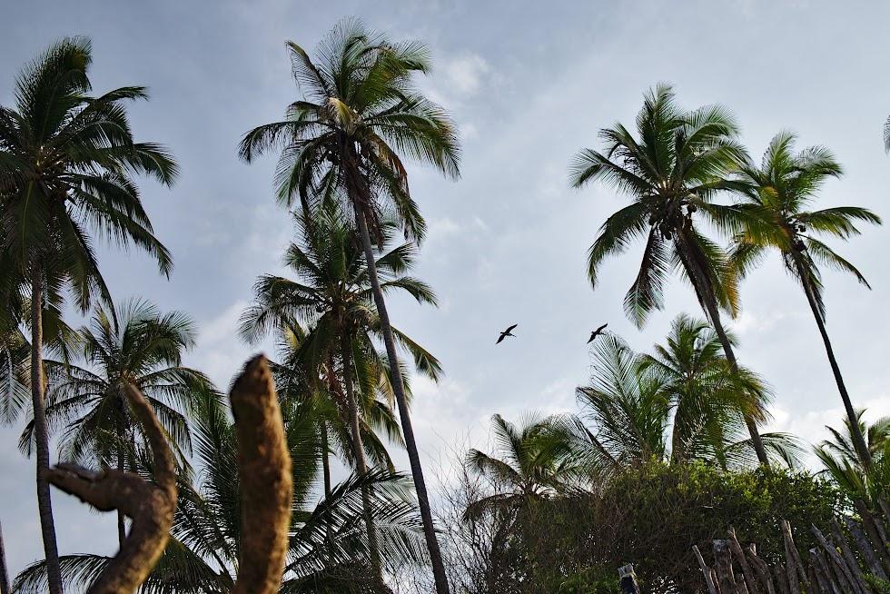 Park Tayrona: palmy i pelikany