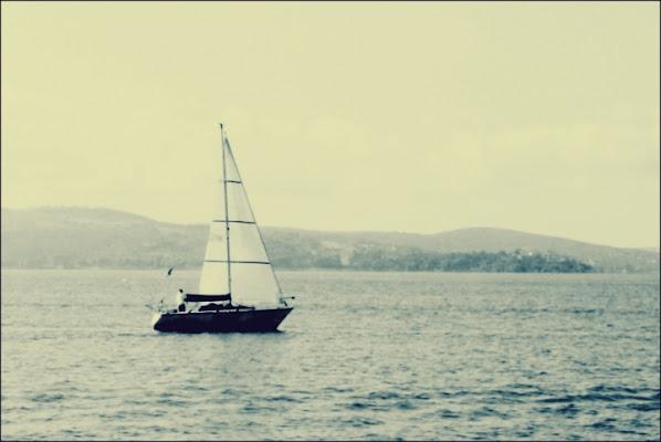Biancheggia vela solitaria... di superpupa