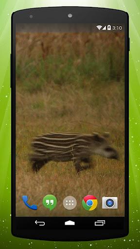 Tapir Live Wallpaper