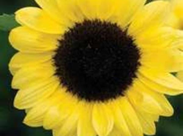 Sunflower Facial Recipe