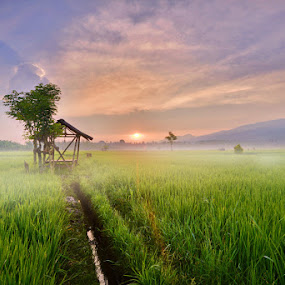 fog in the morning by Dharma Jaya - Landscapes Prairies, Meadows & Fields