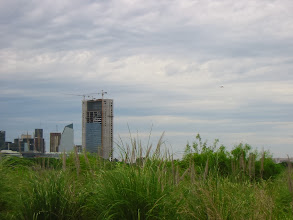 Photo: Puerto Madero over the nature reserve