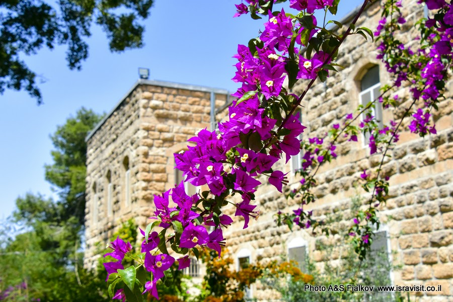 Бугенвиллея, монастырь Дир Рафат, Израиль.