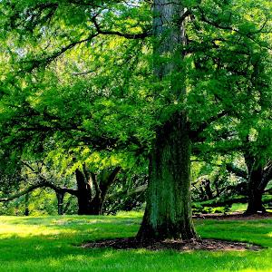 Trees longwood Sep14 copy.jpg