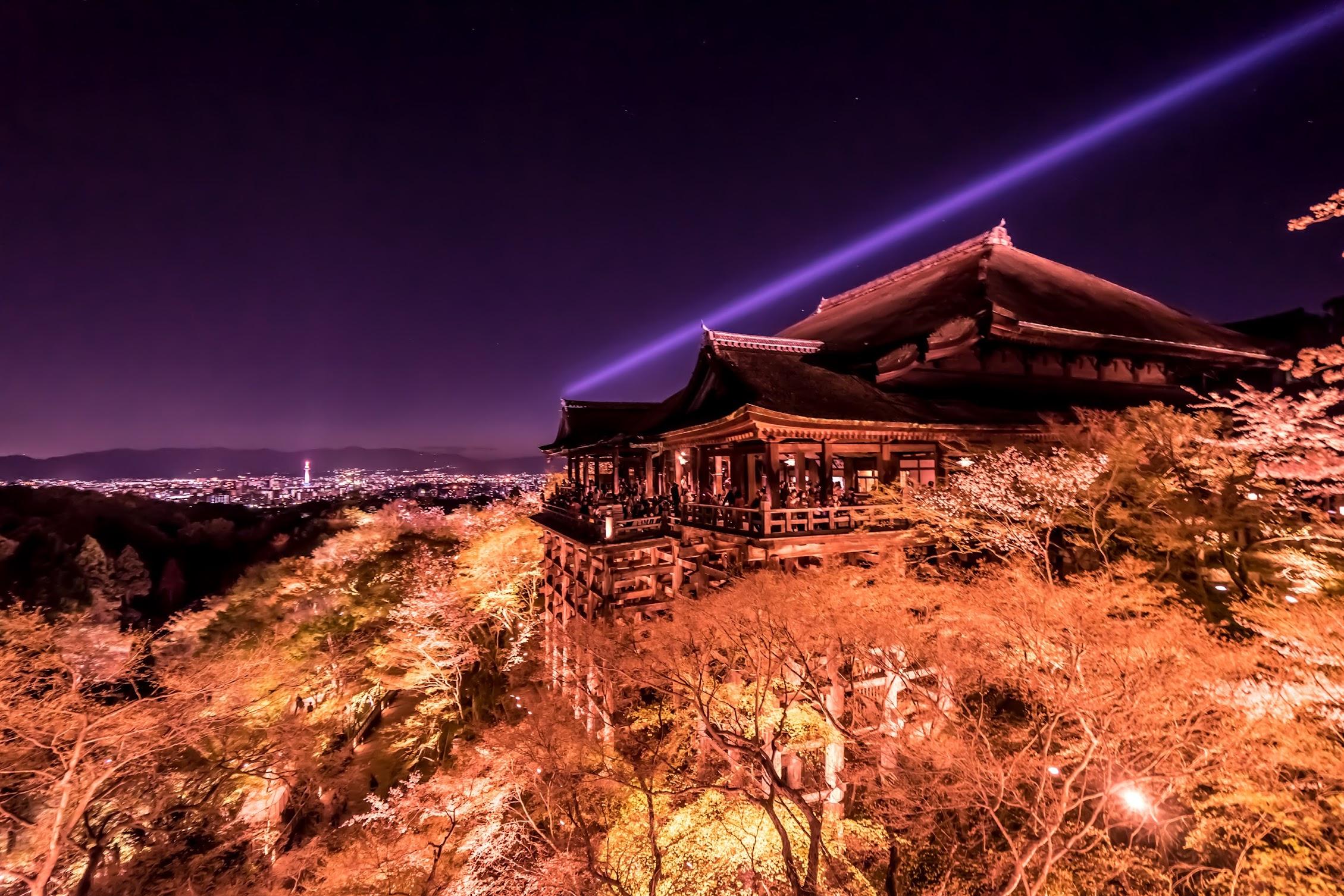 京都 桜 清水寺 ライトアップ1