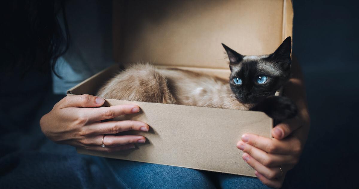 souvent, les chats se sentent en sécurité dans les cartons