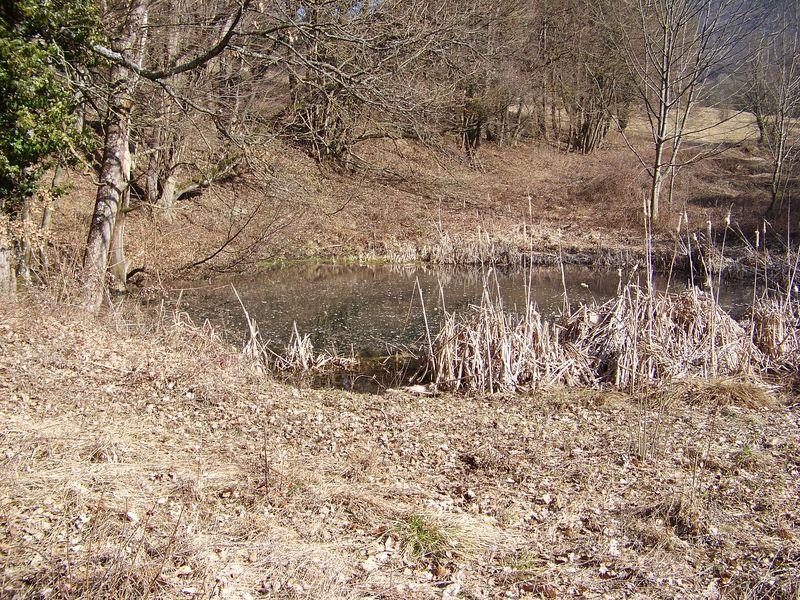 Un petit étang au Perailler