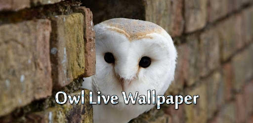 57 Download Wallpaper Live Hantu Terbaik
