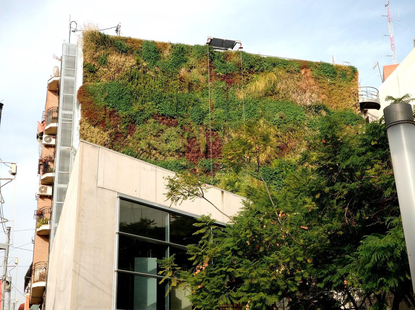 Plantas para jardines verticales de exterior en Alicante
