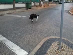 Photo: die beiden ließen sich in Faro durch Verkehr nicht beim Verkehr stören