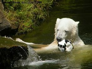 Photo: Holt Knut sich eben seinen Fussball :-)