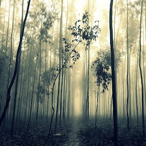 Foggy morning by Nani Garu - Nature Up Close Trees & Bushes ( fog, trees, forest, morning black and white, woods )