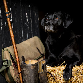 by Tracey Marie Smith - Animals - Dogs Portraits ( dog photographer, dog portrait, labrador )