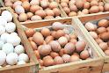 省產新鮮洗選雞蛋