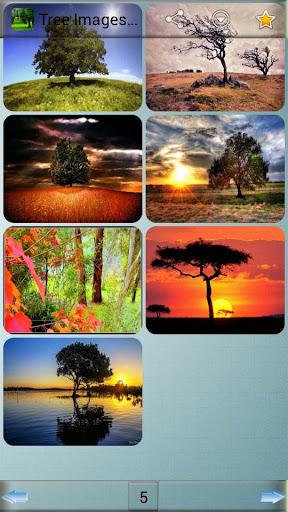 玩娛樂App|树图像和背景免費|APP試玩